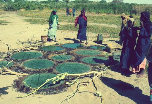 Le peuple Kanembou récolte la spiruline au bord du lac Tchad et la fait séchée dans le sable au soleil