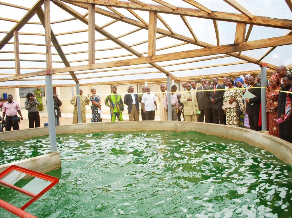 Inauguration d'un bassin de spiruline au Bénin