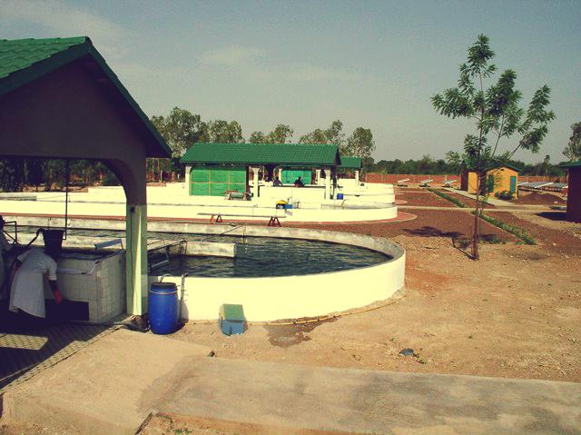 Bassins de spiruline au Burkina Faso
