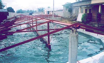 Bassin de spiruline à la ferme Pahou, au Bénin