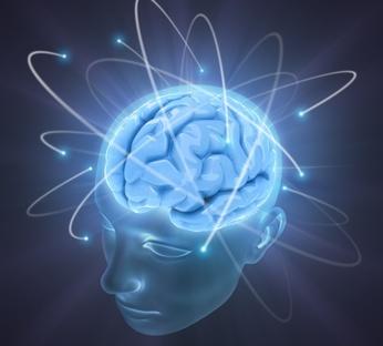 spiruline cerveau