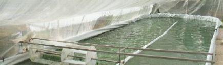 bassin spiruline de provence